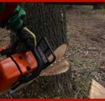Как правильно свалить дерево бензопилой