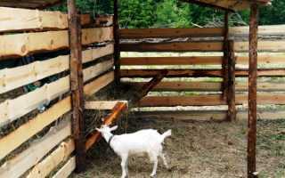 Как правильно сделать кормушку для козы